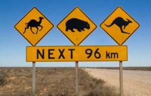 Yellow road signage concerning about wildlife animals on Australian roads.